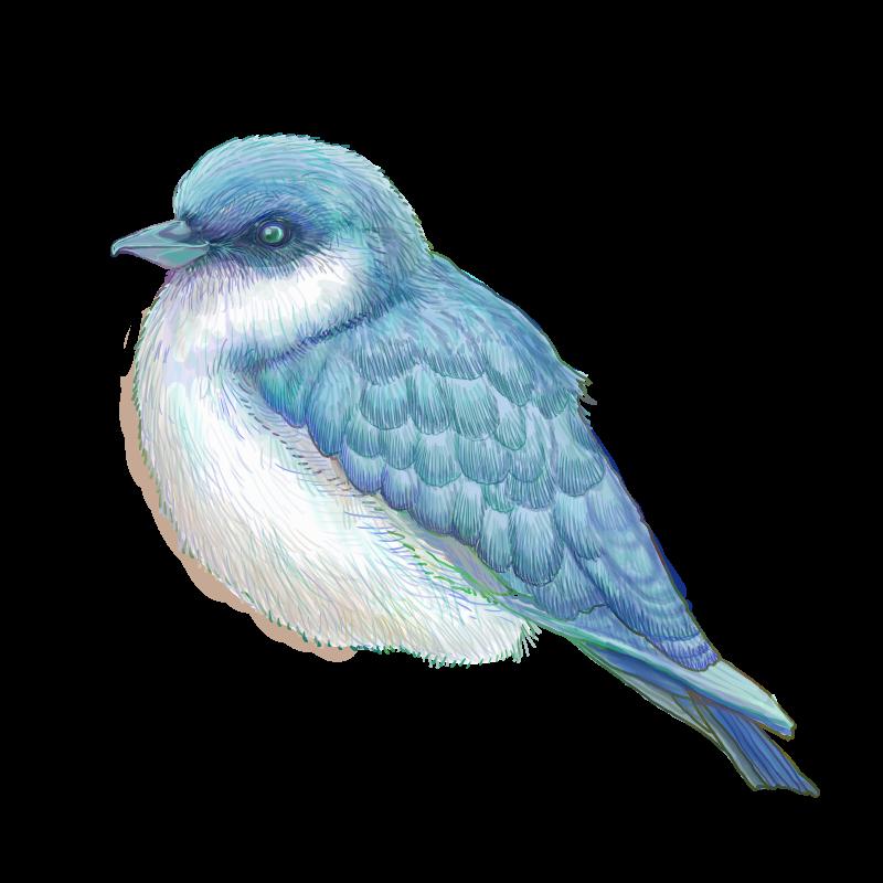 青い鳥のフリーイラスト