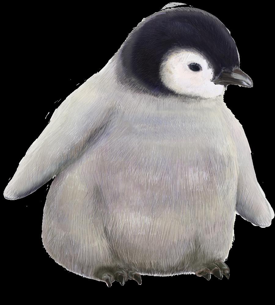 ペンギン無料イラスト素材