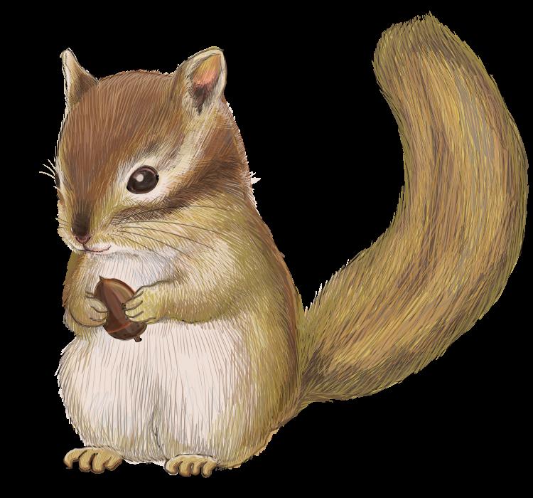 どんぐりを持った栗鼠の無料イラスト