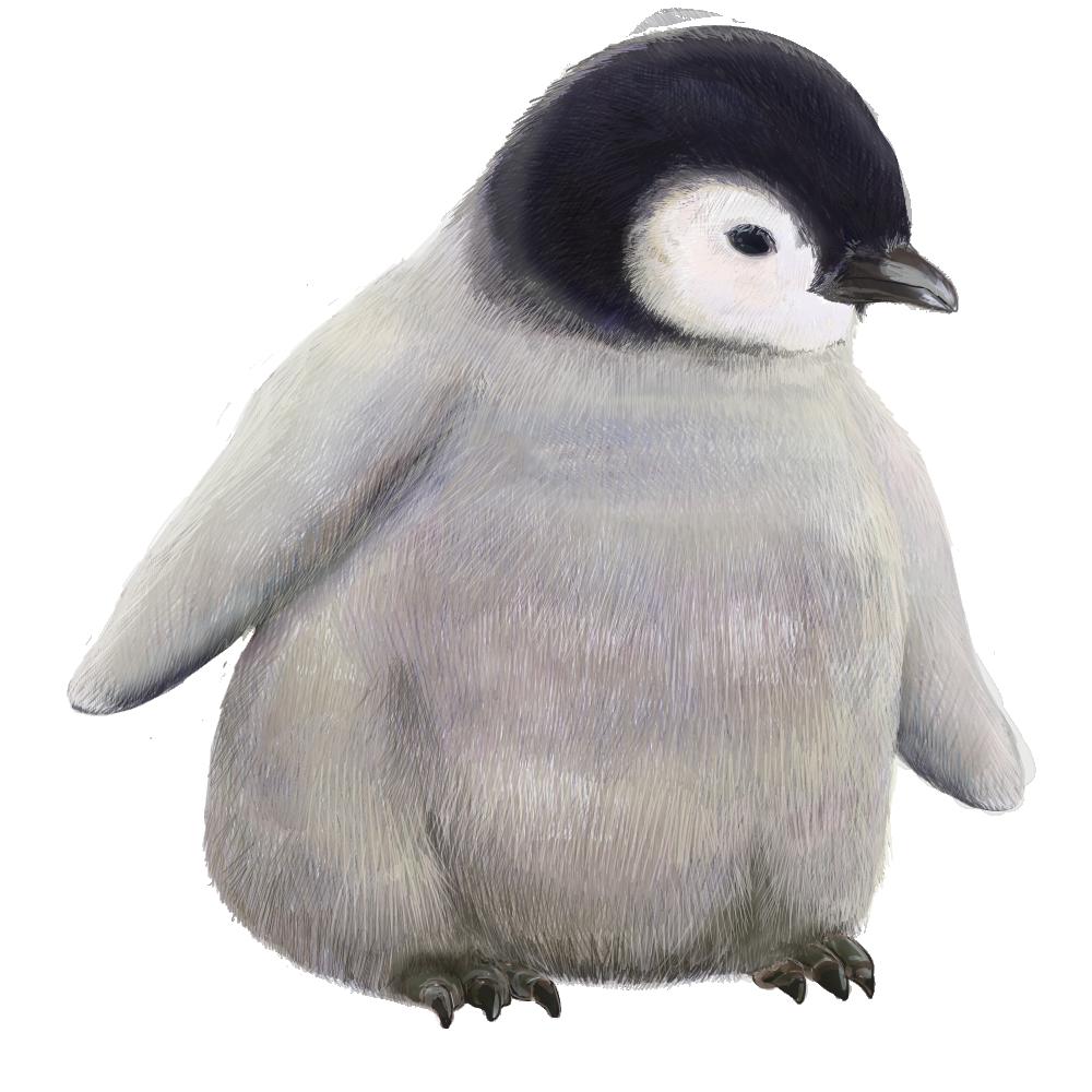 可愛い赤ちゃんペンギンの無料画像