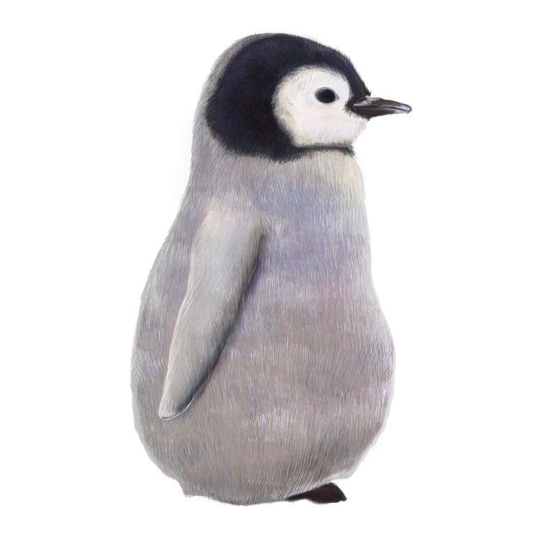 ペンギンのフリーイラスト