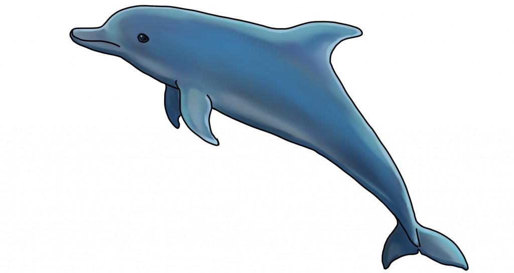 ジャンプしているイルカの無料イラスト素材