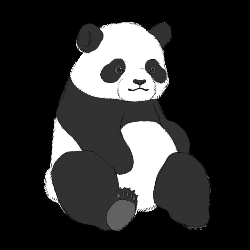 パンダのフリーイラスト