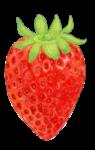 苺フリーイラスト素材